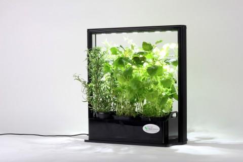 Serre Lumineuse pour aromates - EcoHerb - 17W
