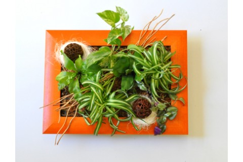 Tableau Floral Nouméa - Cadre bois orange
